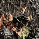 Mossy Oak Break-up camouflage wrapping material